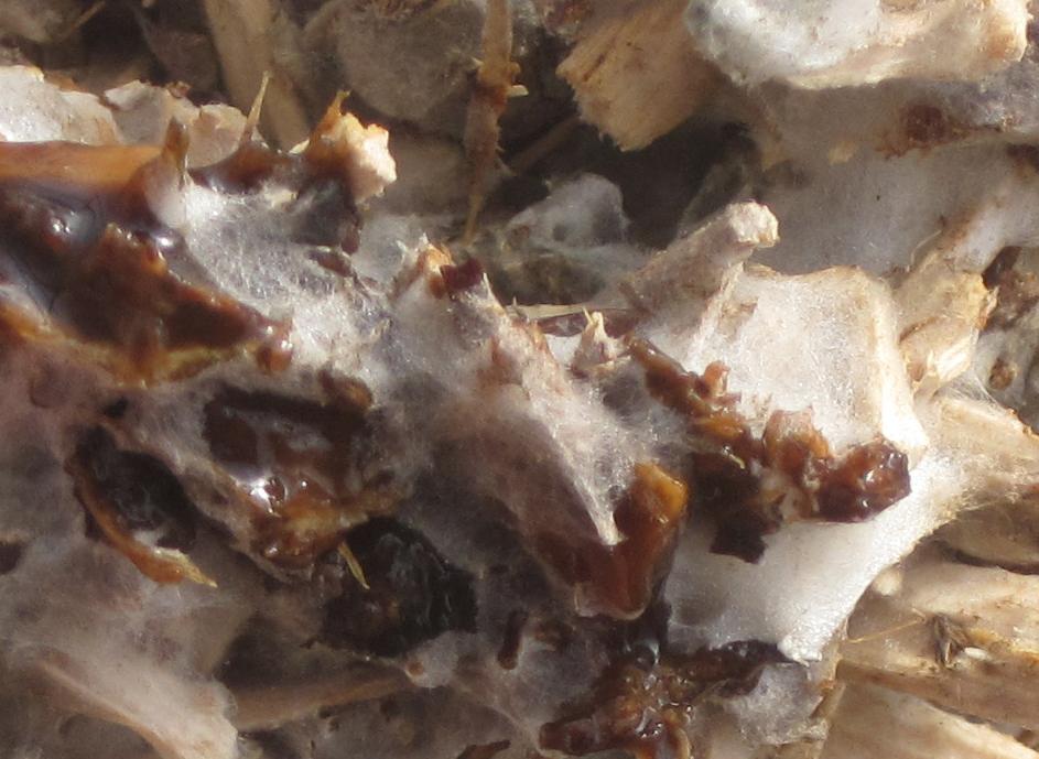 mycelium_digest