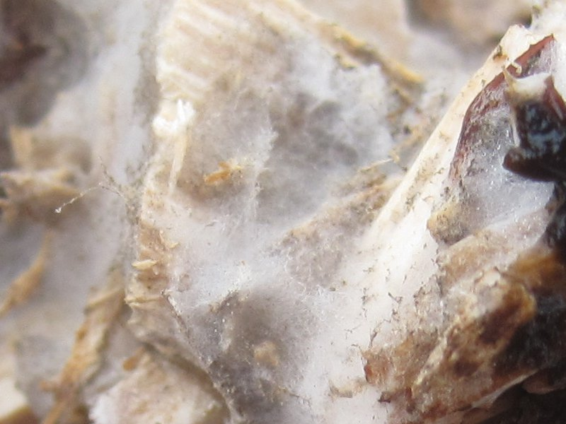 mycelium_landscape