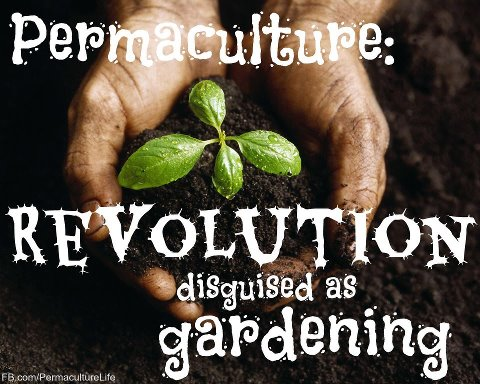 permaculture revolution