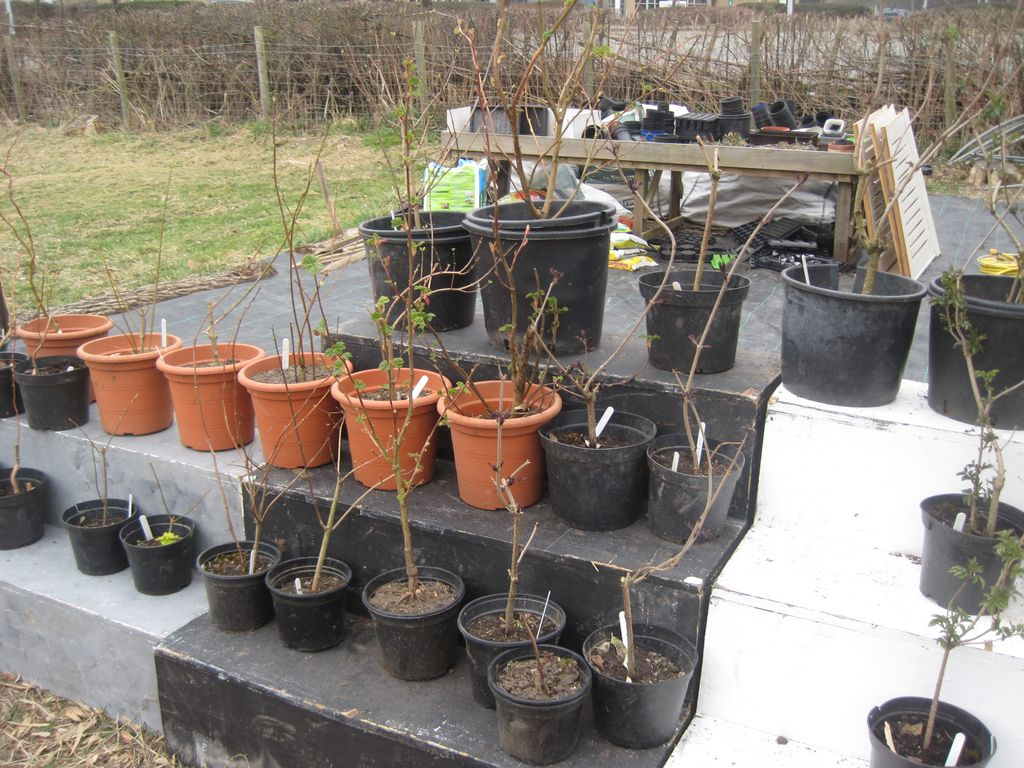 the start of the Get-Growing plant nursery