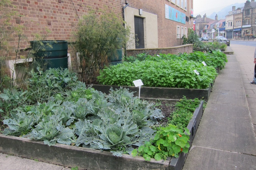 Youth Centre raised beds