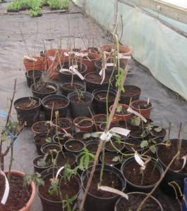 fg-plants