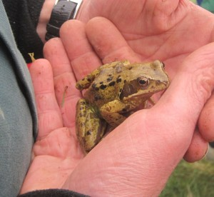 Frog came to visit us planting, to see what all the fuss was about